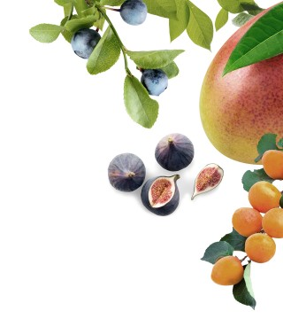 Maison Riviera Leaves Blueberries Figs Mango Apricot