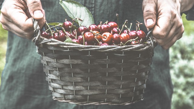 Maison Riviera Our Company Cherries in basket artisan-style
